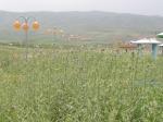 5912586-Halabja_park_Halabja